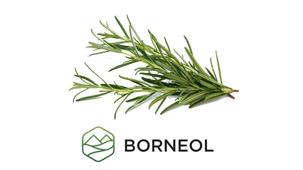 Borneol - Terpene Education 1