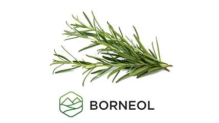 Borneol - Terpene Education